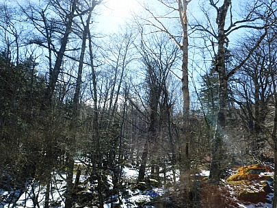 2016-03-02 10.57.32 P1000794 Simon - view of forest from Bus.jpeg: 4608x3456, 6328k (2016 Mar 01 21:57)