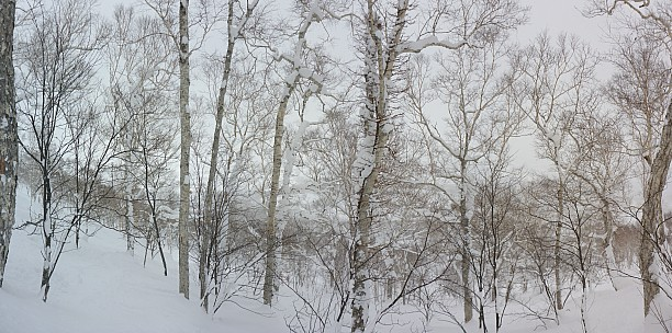 2016-02-25 11.15.46 Panorama Simon - in the An'nupuri trees_stitch.jpg: 8794x4371, 40897k (2016 Apr 01 20:01)